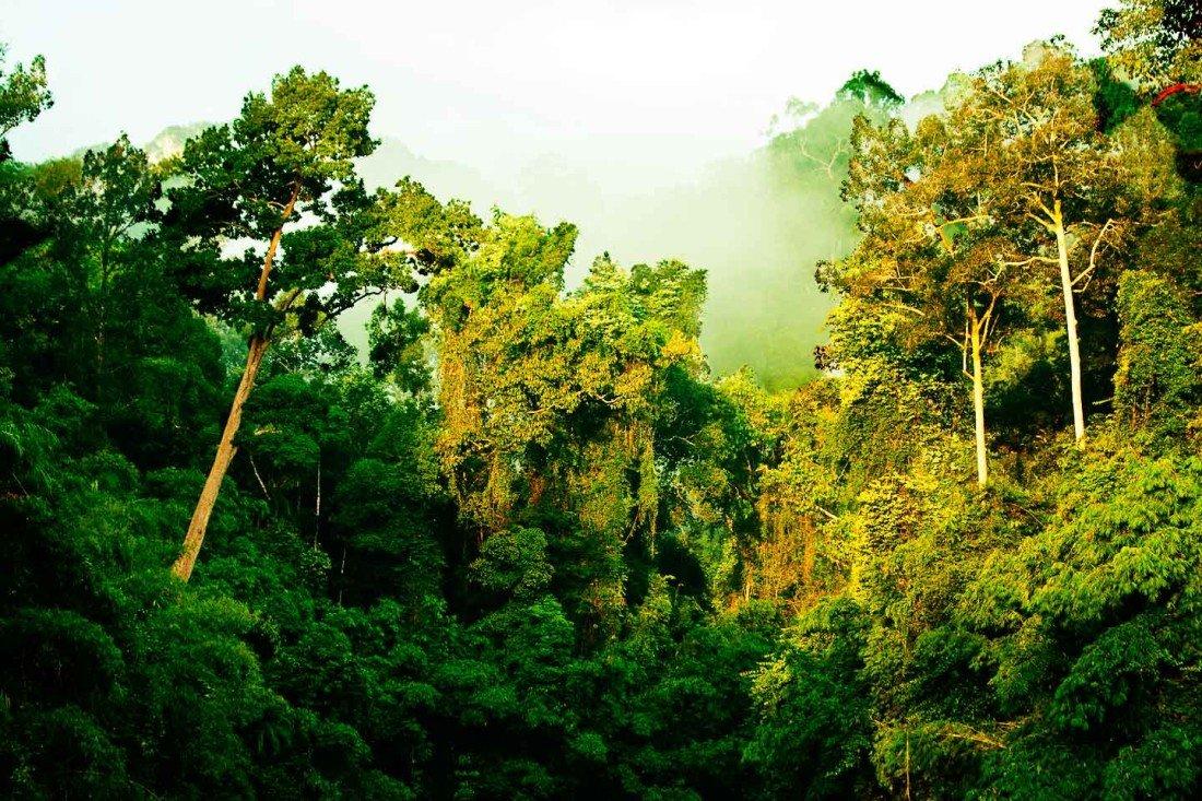 Misty Rainforest in the Khao Sok National Park