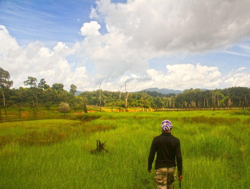 Enjoying the lush buffalo grass in Khao Sok, searching for wildlife in Thailand