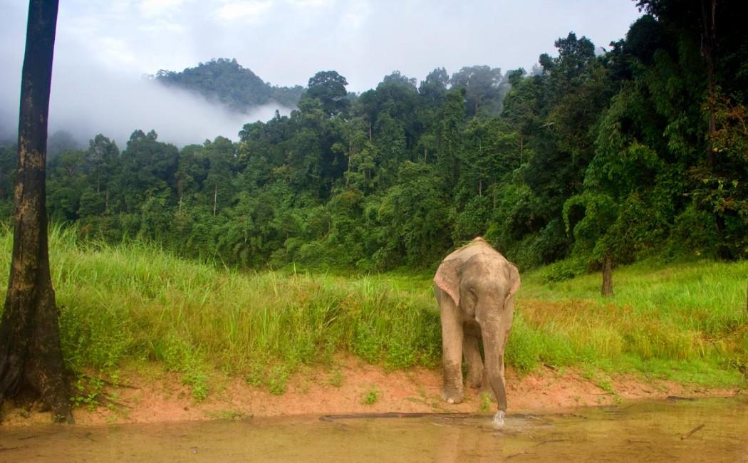 Khao Sok Wildlife Explorer
